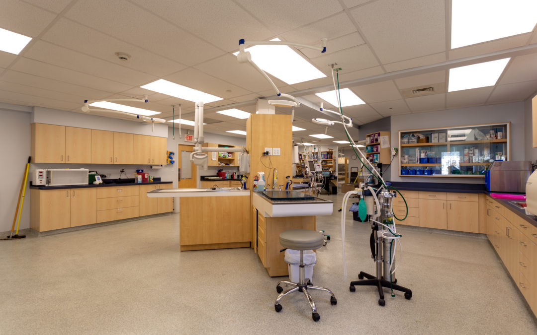 Acella Construction Completes Expansion of South Coastal Animal Health